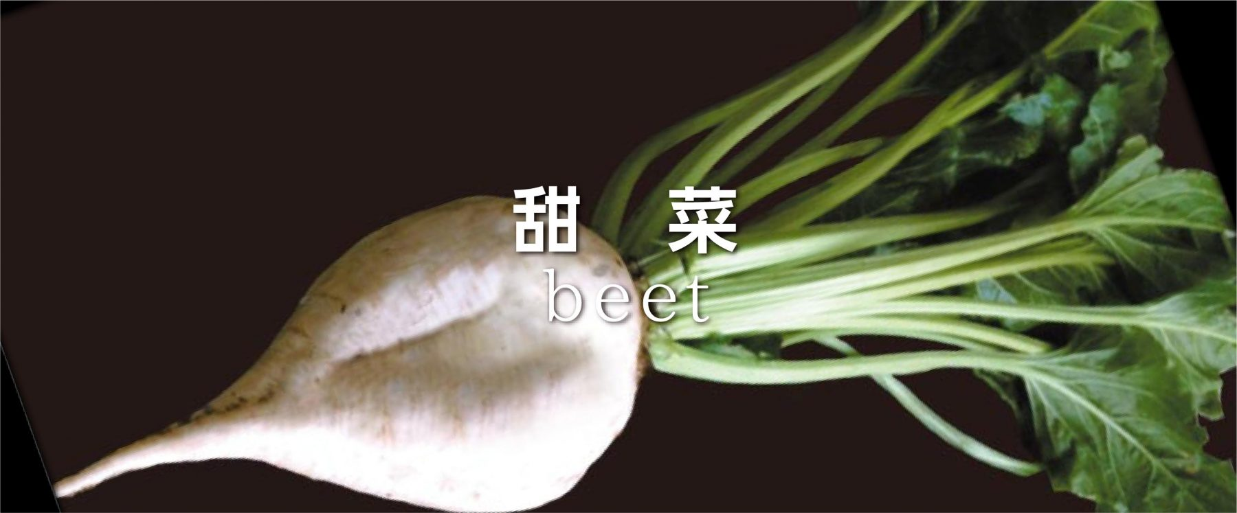 beet3