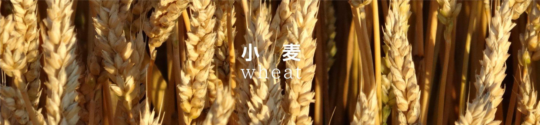 wheat4a