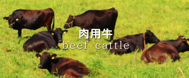 beef_750