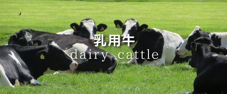 dairy_750